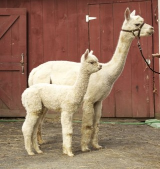 Sparkle and 2012 cria Agenor