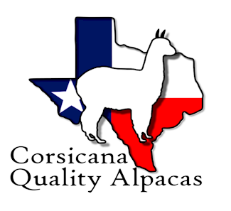 TX Alpaca for Sale at Corsicana Quality Alpacas ranches.