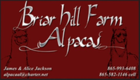 Briar Hill Farm Alpacas