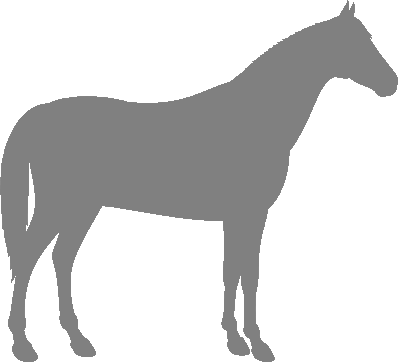 About Noriker Horses
