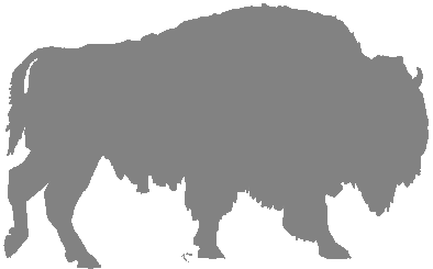 About Plains Bisons