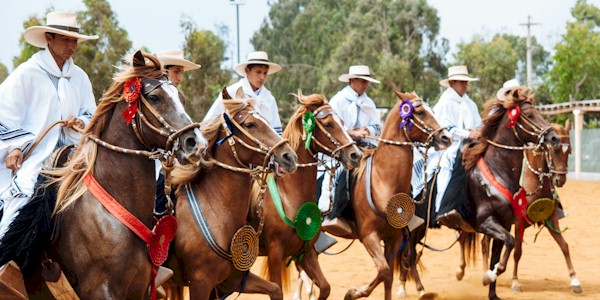 Image: <a href=http://ustoa.com/blog/lima-peru-city-kings/10-the-skilled-peruvian-paso-horse/ target = _blank class = body>USTOA</a>