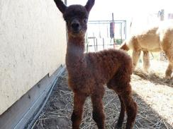 Autumn Bliss 2011 cria