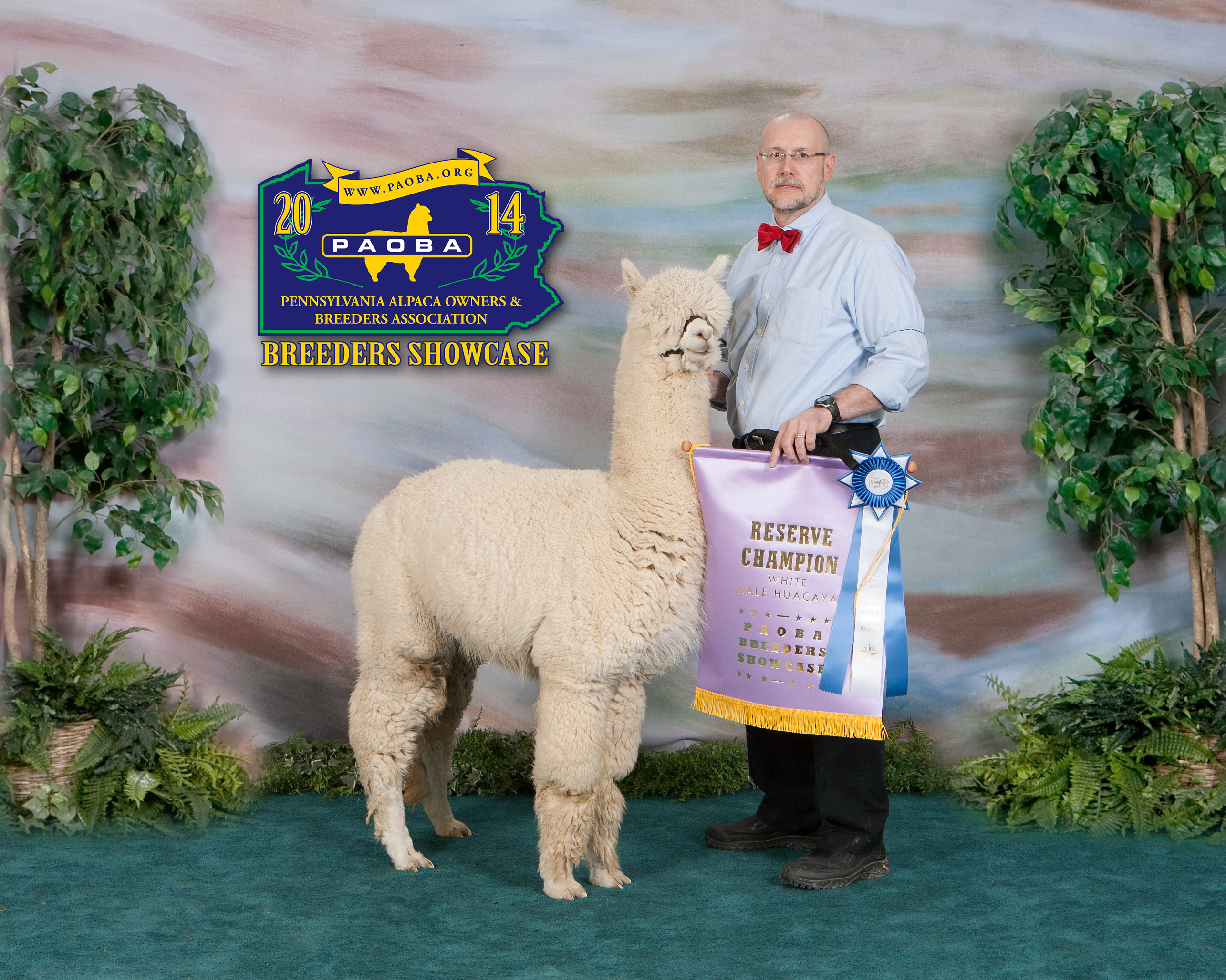 Alpaca For Sale - Alleghenies' Zeus - Proven Herd Sire at Alpacas of the Alleghenies, LLC