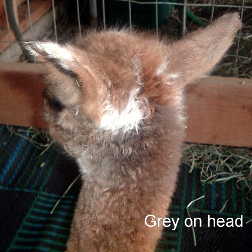 <B>AS CRIA,GREY FLEECE</B>