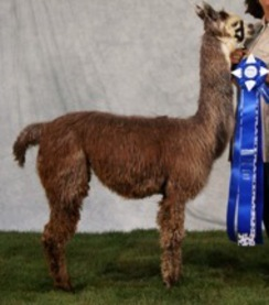 Her first blue ribbon in 2008