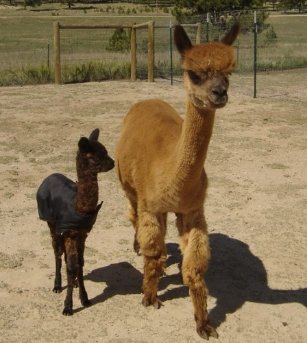Carmen with 2010 cria