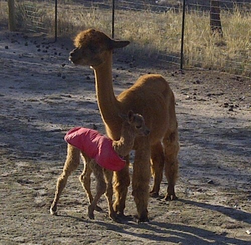 Carmen with 2011 cria