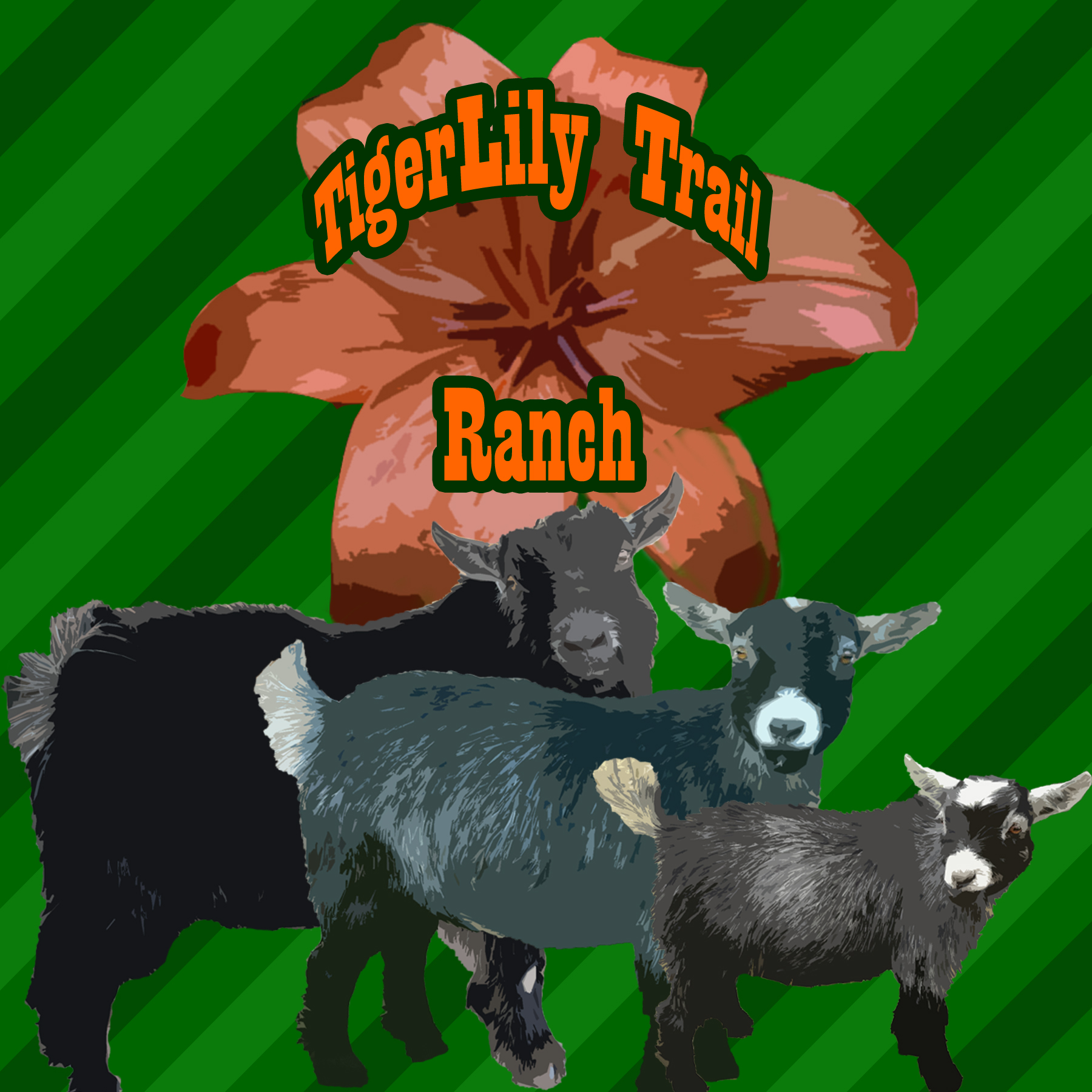 TigerLily Trail Ranch