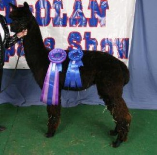 Blue Ribbon and Color Champ!