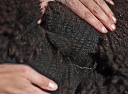 2013 Fleece