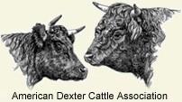 American Dexter Cattle Association
