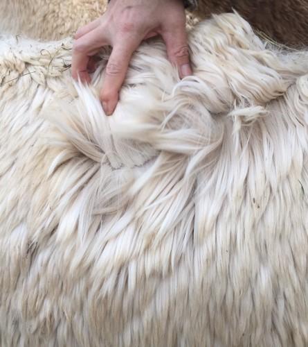 Lady's fleece