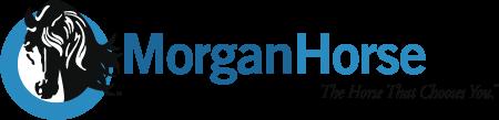 American Morgan Horse Association