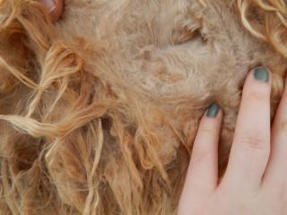 Amelia's fleece