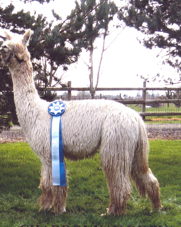 Another Blue Ribbon Win
