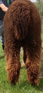 Juju rear legs