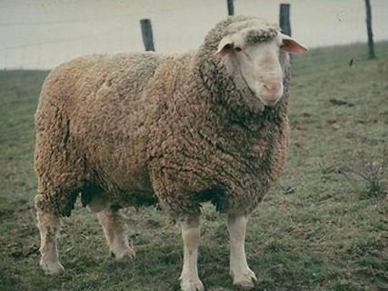 Source: Sheep 101
