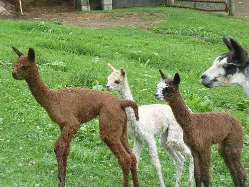 New crias Tessi, Jackie, Evan